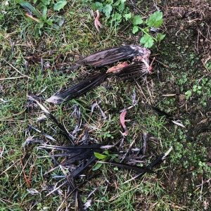 dead bird and feathers on the ground