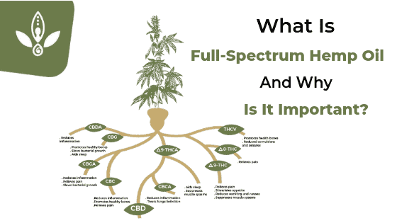 what is full spectrum hemp oil diagram