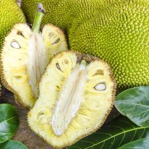 Cross-section ripe fruit of giant Jack-fruit.