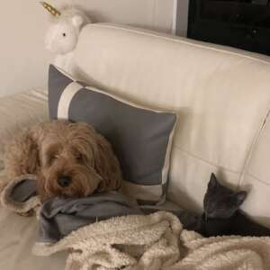 colloidal silver and your pets